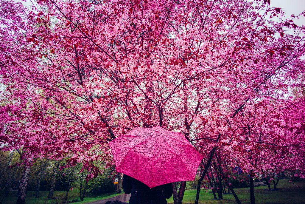 helsinki bloesem roze